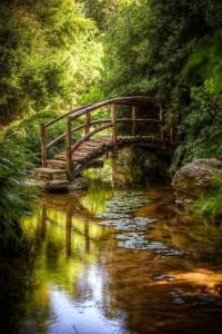 petit pont + reflet